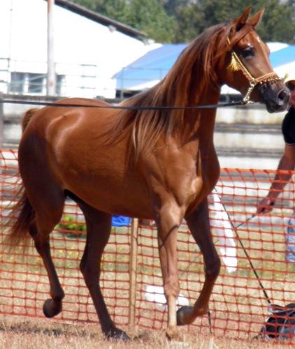 Equus Lucus 2011
