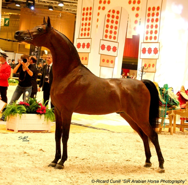 Marwan Al Shaqab. World Champion. Paris 2008 (1)