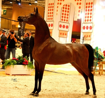 Marwan Al Shaqab. World Champion. Paris 2008 (2)