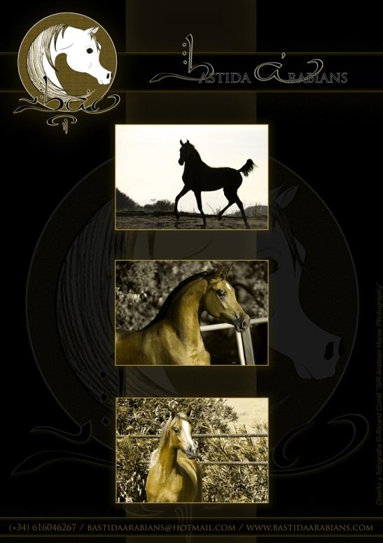 Anuncio Catalogo Silleda_Bastida Arabians